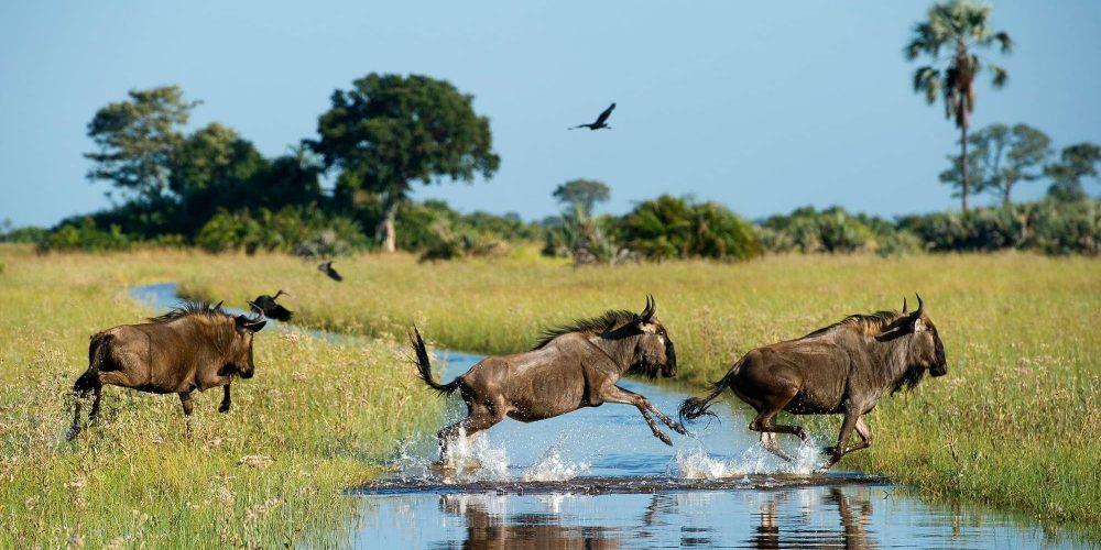 Bushtracks Safari (Kasane, Botswana)